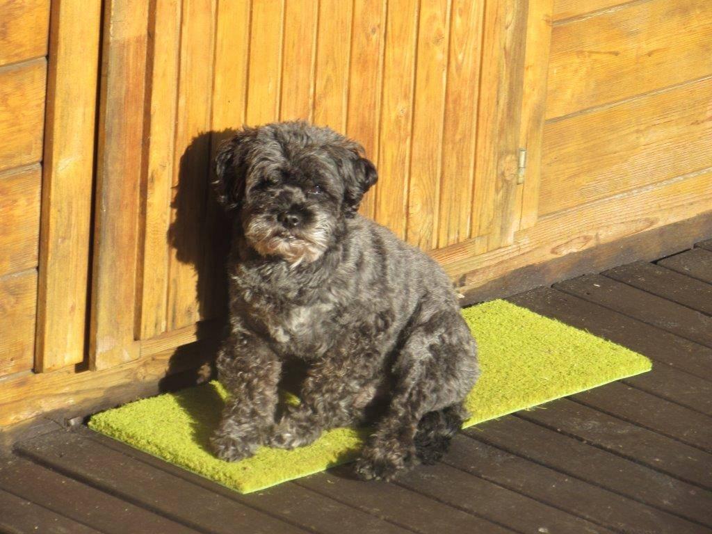 Lio genießt die ersten warmen Sonnenstrahlen