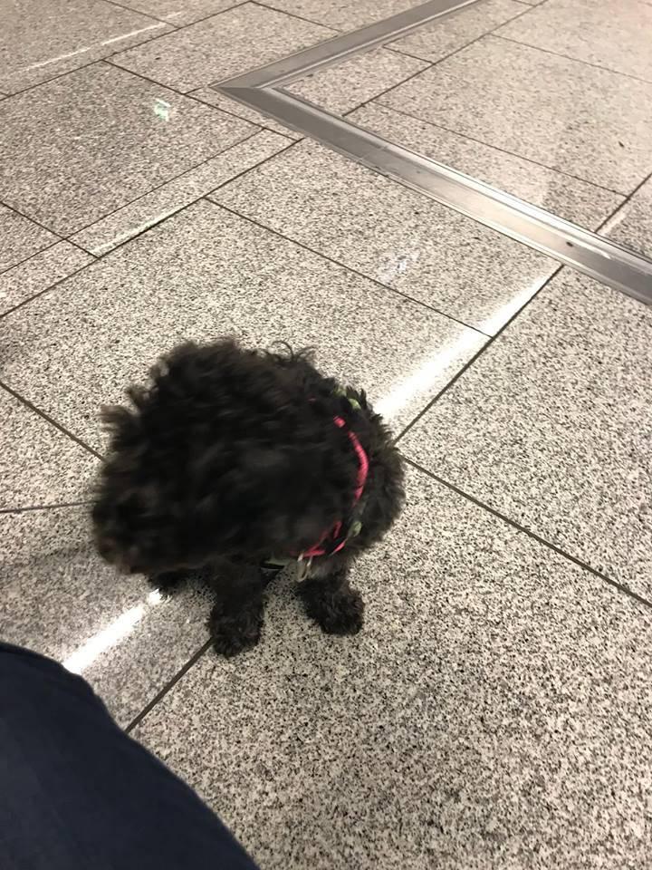 Lucie bei ihrer Ankunft am 25.09.2018