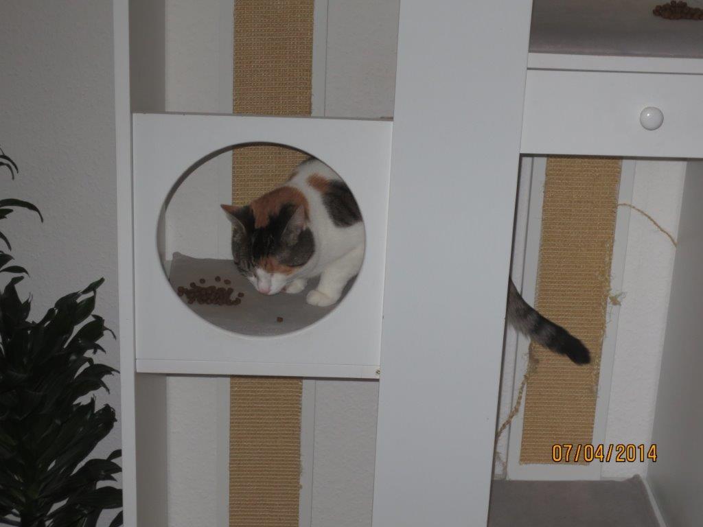 Maja sucht ein neues Zuhause
