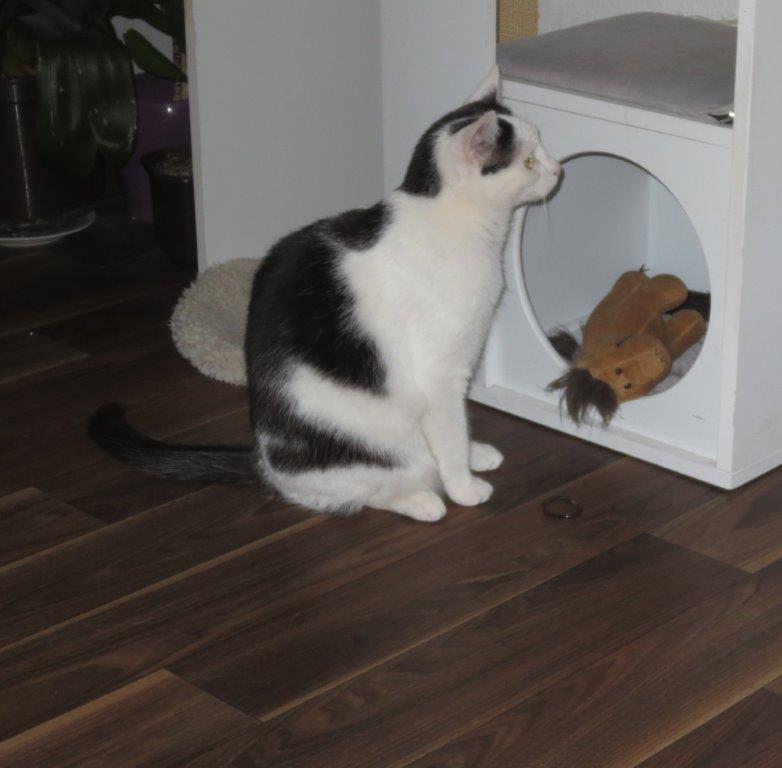 Mia sucht ein neues Zuhause