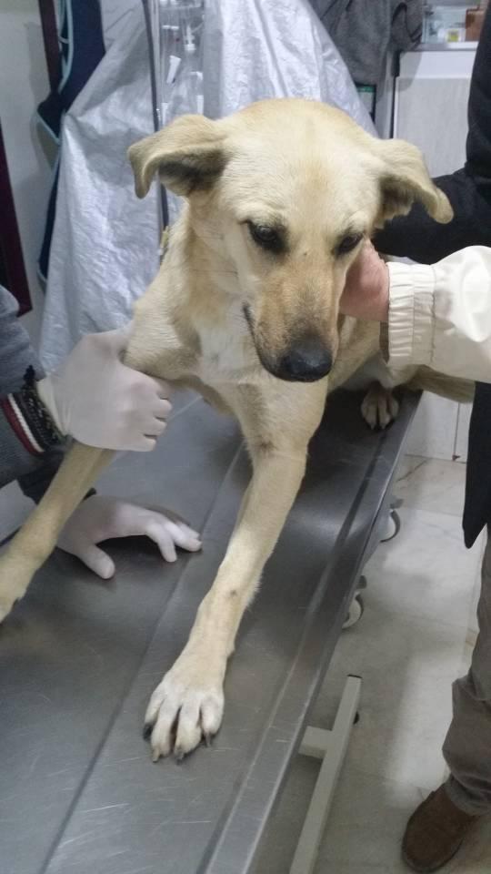 Rosa beim Tierarzt
