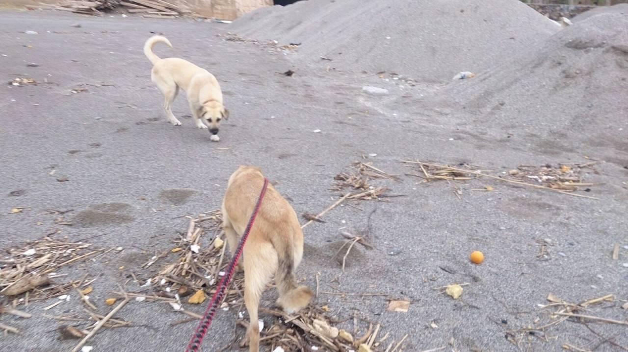 Rosa auf einem Strandspaziergang
