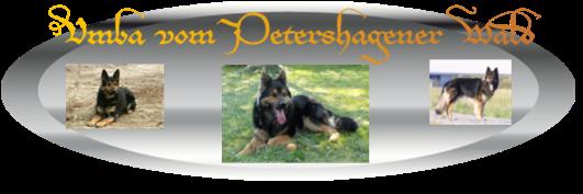 Schäferhund  - Umba vom Petershagener Wald